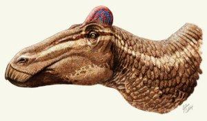 image_1628-Edmontosaurus-regalis